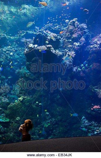 Steinhart Aquarium Stock Photos Steinhart Aquarium Stock