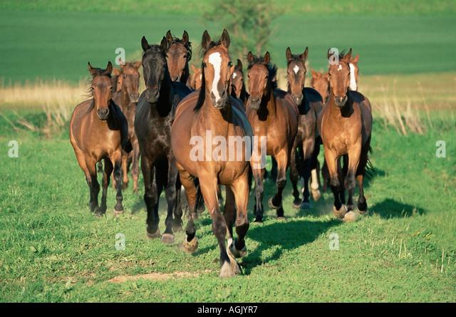 Horse Running S...