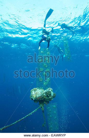Tahitian Pearl Diving Stock Photos Amp Tahitian Pearl Diving