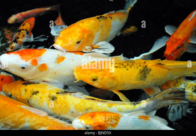 Goldfish pond china stock photos goldfish pond china for Chinese koi pond