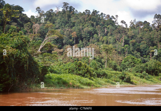 national bank of borneo One of the last remaining truly wild places on earth, borneo offers rare treats for the nature lover – see orangutans at the semenggoh sanctuary and the quirky proboscis monkeys in bako national park.