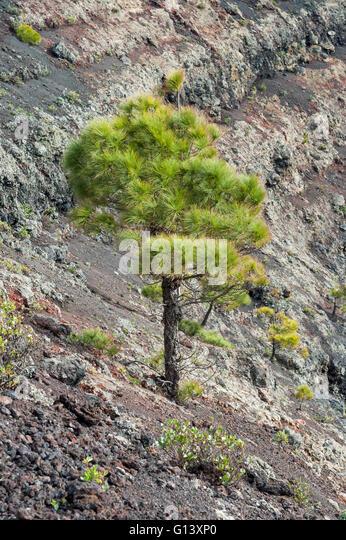 fertile soil volcano - photo #30