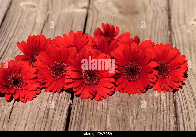 Picnic Table Background red gerbera daisies stock photos & red gerbera daisies stock