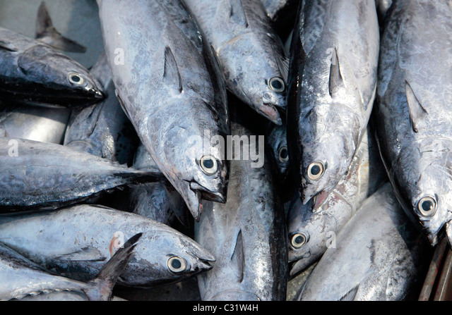 Bang saphan market stock photos bang saphan market stock for Daily fresh fish