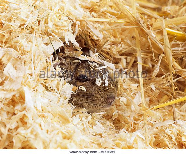 Verstecke stock photos images alamy