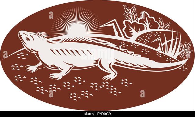 Tuatara Lizard Stock Photos Tuatara Lizard Stock Images Alamy