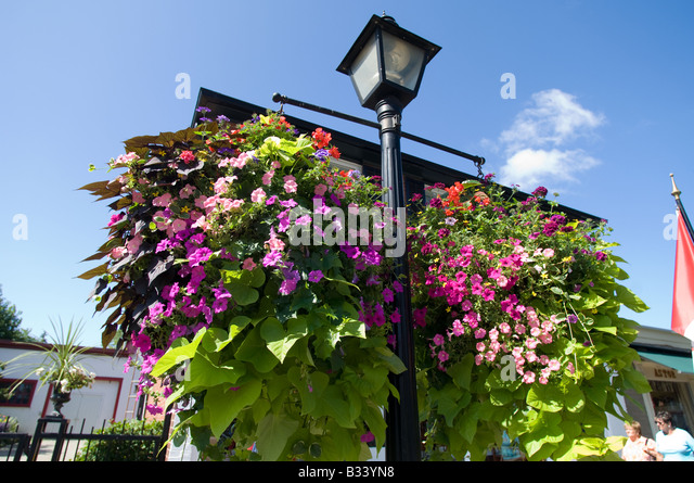 Hanging Flower Baskets With Lights : Hanging street flowers stock photos