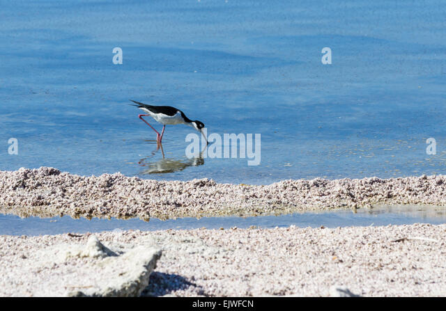 Agrochemical stock photos agrochemical stock images alamy for Salton sea fishing