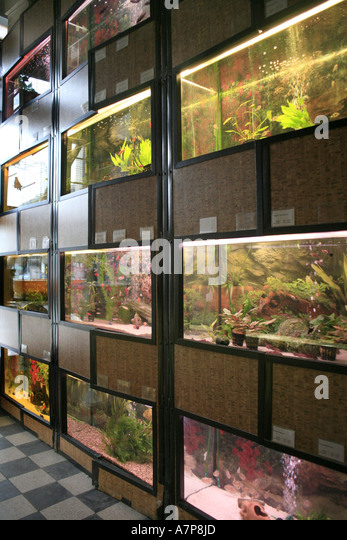 Fish tanks pet store stock photos fish tanks pet store for Pet supermarket fish tanks