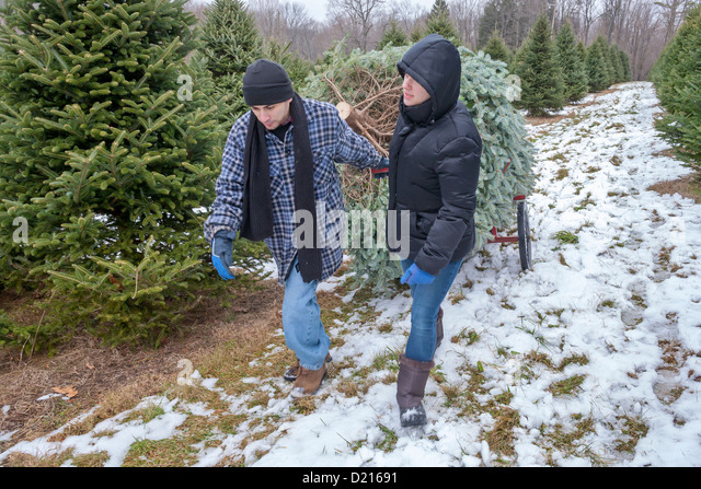 Teenager Cutting Down Christmas Tree Stock Photos & Teenager ...