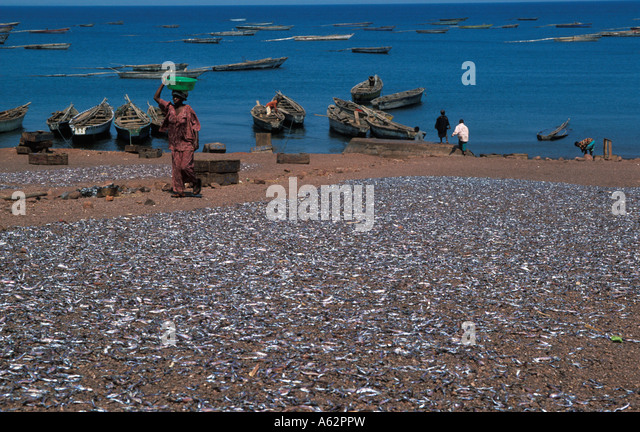 Tanganyika lake fish stock photos tanganyika lake fish for Lake tanganyika fish