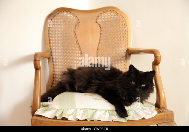 Black cat stock photos black cat stock images alamy for Cute black chairs