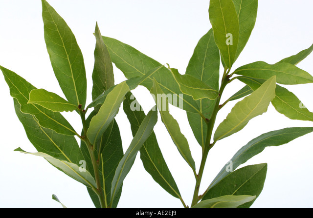 Cook botany bay stock photos cook botany bay stock images alamy - Cook bay leaves ...