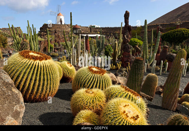 Cacti in jardin de cactus stock photos cacti in jardin for Jardin de cactus lanzarote