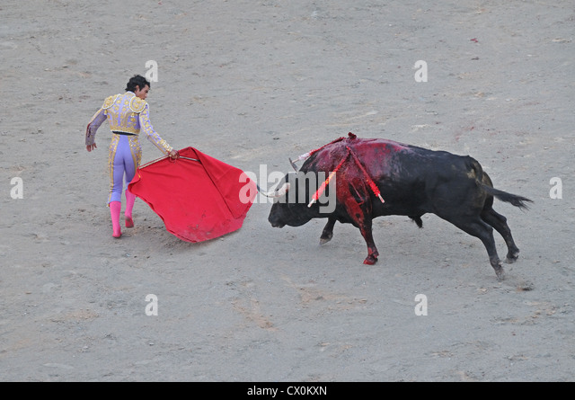 Bloody Bull Stock Photos & Bloody Bull Stock Images - Alamy
