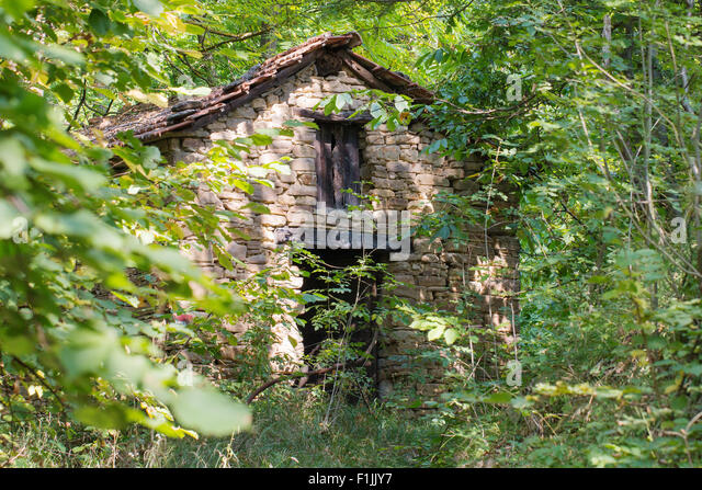 Old Abandoned Cottage In The Woods Surrounded By Vegetation