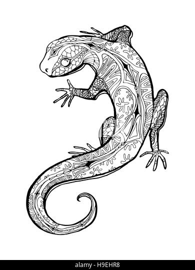 lizard tropical illustration for adult coloring book hand drawn line art stock