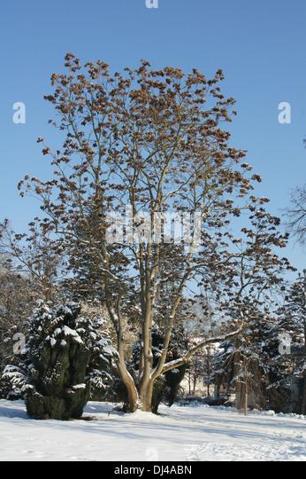 eingesponnene bäume und sträucher