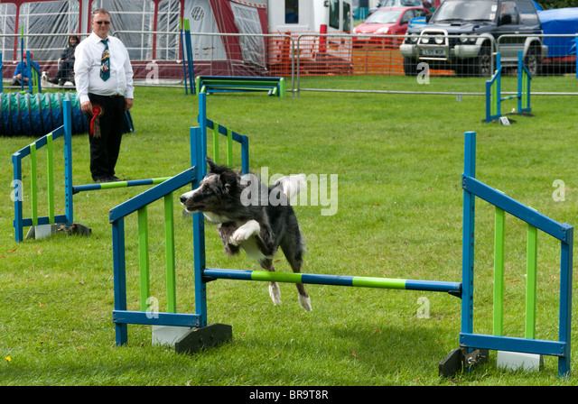 Jump Cups - Obedience, Agility, and Flyball - BC Boards