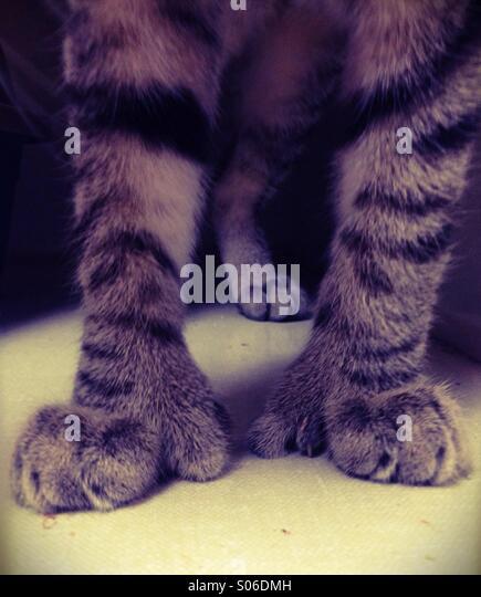 giant-kitten-paws-s06dmh.jpg