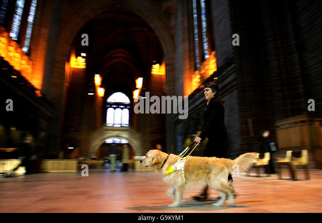 guide dogs for the blind association uk