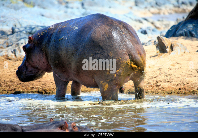 D 233 F 233 Cation Stock Photos Amp D 233 F 233 Cation Stock Images Alamy