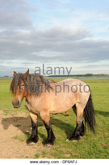 long manes stock photos - photo #35