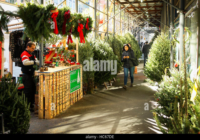 woman on cell phone walking through christmas trees in new york ny stock image - Christmas Tree Market