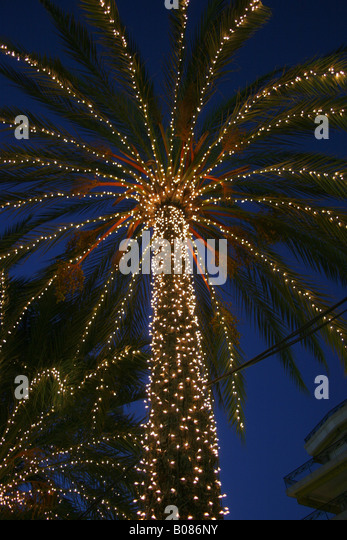 christmas lights on a palm tree at the promenade in nice france stock image - Palm Tree With Christmas Lights