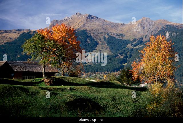 mountain meadow autumn above - photo #6