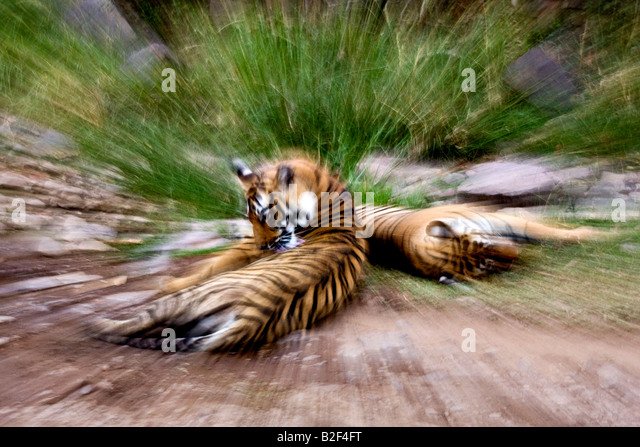 Zooming Effect Stock Photos & Zooming Effect Stock Images - Alamy
