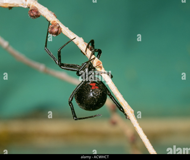 "spiders research paper ""arachnophobia – fear of spiders lisa learning experience paper psychology 103 facing fear can be join millions of other students and start your research."