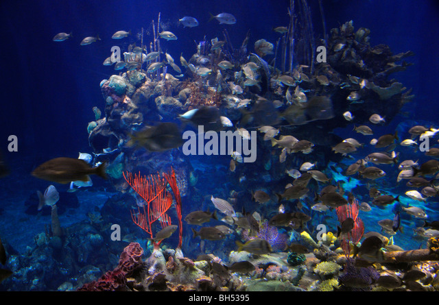 Aquarium Nobody United Stock Photos Aquarium Nobody