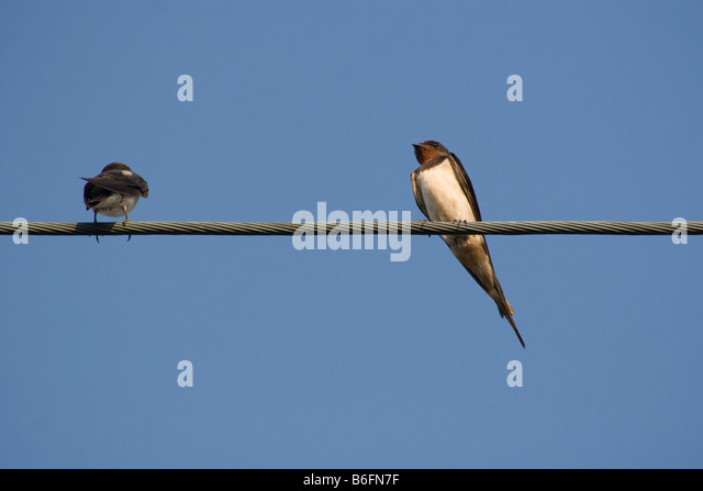 Electricity Wire Stock Photos & Electricity Wire Stock Images - Alamy