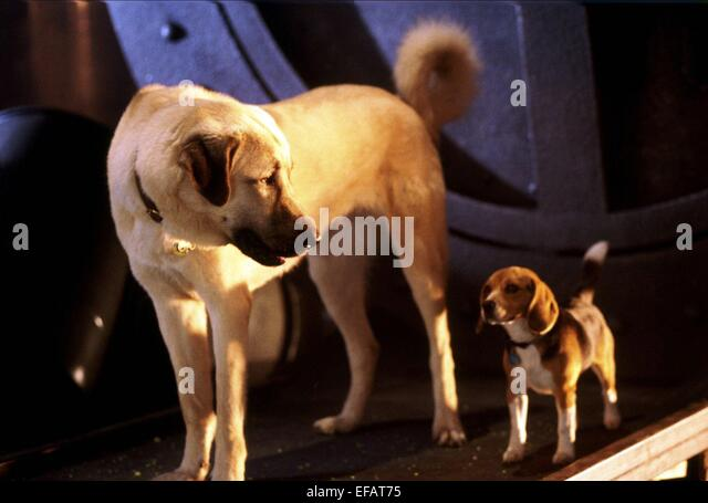 Cats And Dogs Film Stock Photos & Cats And Dogs Film Stock ...