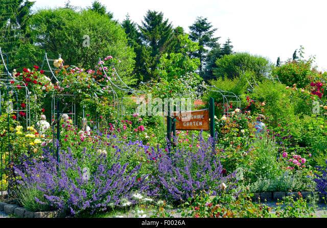 Elegant Rose Garden, Arrange As A Old English Yorkshire Garden , Germany   Stock  Image