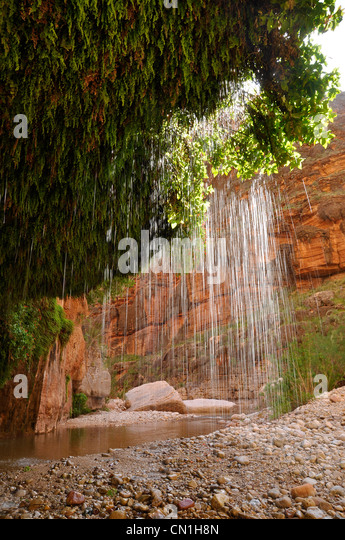 Mimulus cardinalis stock photos mimulus cardinalis stock for The canyons at falling water