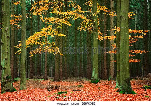 nadelwälder in deutschland