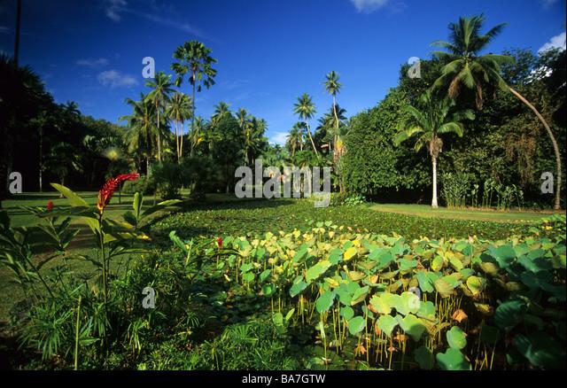 Nearest Botanical Gardens 28 Images Slideshow 1912 01