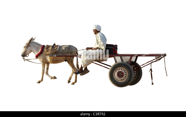 Donkey Cut Out Stock Images Amp Pictures Alamy