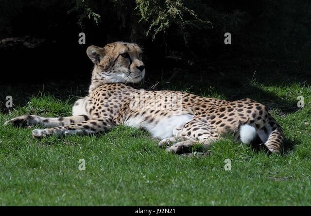 the role of domestic animals on the predation of wildlife The effects of domestic dogs on wildlife is dependent on their nature and management (whether domestic/on-leash or free-roaming, total/partial dependence on human mediated resources or completely .