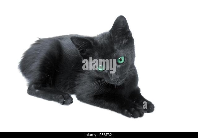 black white cat green eyes stock photos amp black white cat