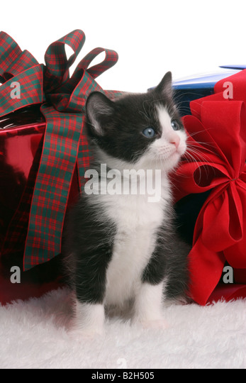 Black Christmas Cat Surronded By Presents
