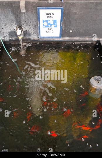 Fish tanks for sale stock photos fish tanks for sale for Pond stocking fish for sale