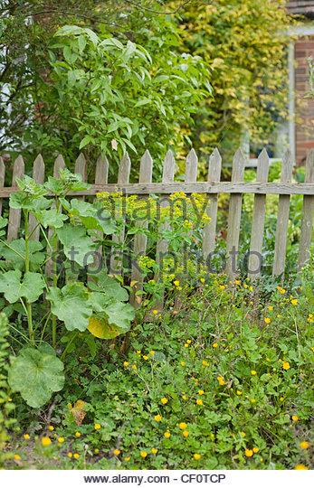 Enclosed Garden With Wooden Fence.   Stock Image