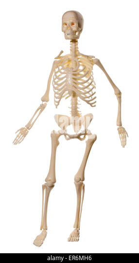 child anatomy organs stock photos & child anatomy organs stock, Skeleton