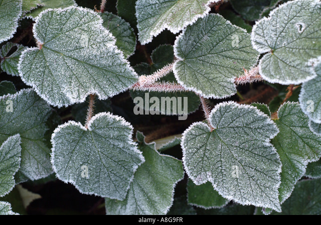 Pleasant Colby Woodland Gardens Stock Photos  Colby Woodland Gardens Stock  With Goodlooking Frost Highlights Bramble Leaves  Stock Image With Cool Aldi Garden Tools Also Concrete Garden Ornaments In Addition Hammamet Garden Tunisia And Gardens Surgery As Well As Gardens Of Water Additionally Taxis Welwyn Garden City From Alamycom With   Goodlooking Colby Woodland Gardens Stock Photos  Colby Woodland Gardens Stock  With Cool Frost Highlights Bramble Leaves  Stock Image And Pleasant Aldi Garden Tools Also Concrete Garden Ornaments In Addition Hammamet Garden Tunisia From Alamycom