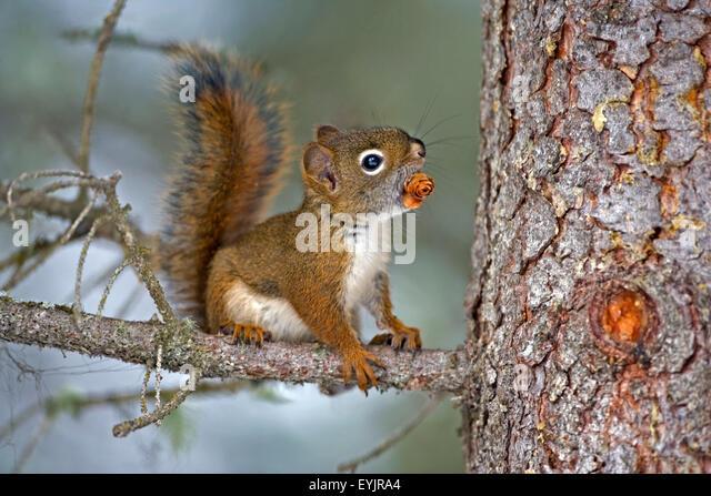 Baby Tree Squirrel | www.pixshark.com - Images Galleries ...