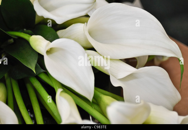 lillies bouquet stock photos  lillies bouquet stock images  alamy, Beautiful flower