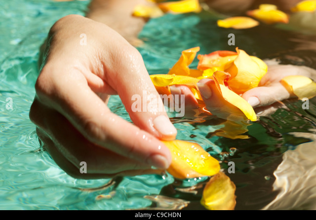 Floating flowers stock photos floating flowers stock for Floating flowers in water